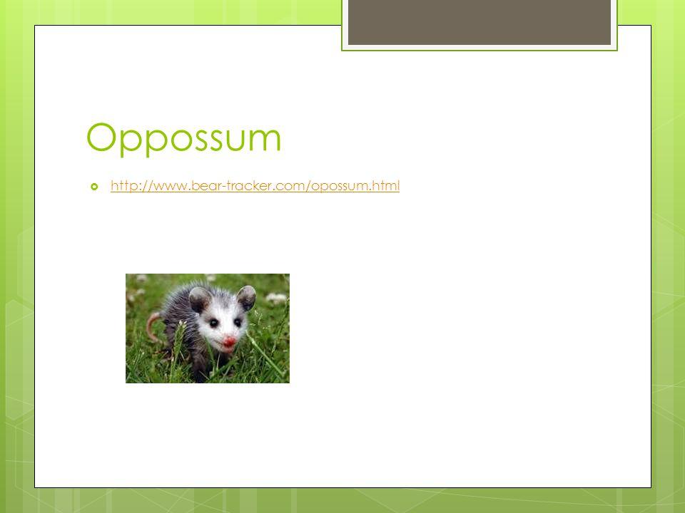 Oppossum http://www.bear-tracker.com/opossum.html