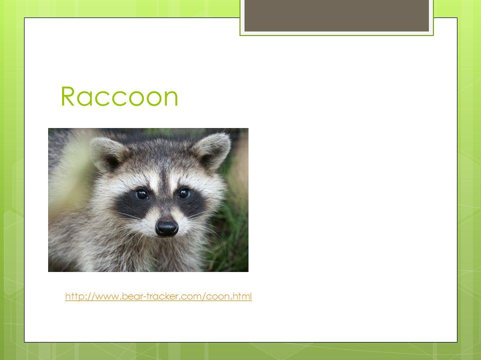 Raccoon http://www.bear-tracker.com/coon.html