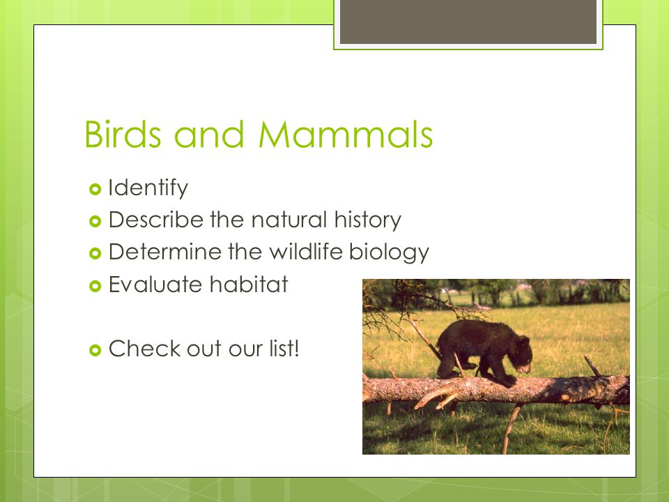Birds and Mammals Identify Describe the natural history
