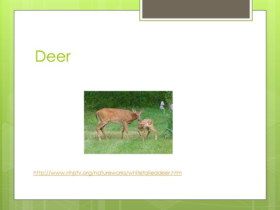 Deer http://www.nhptv.org/natureworks/whitetaileddeer.htm