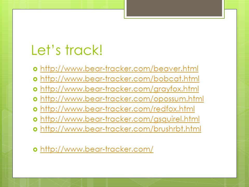 Let's track! http://www.bear-tracker.com/beaver.html