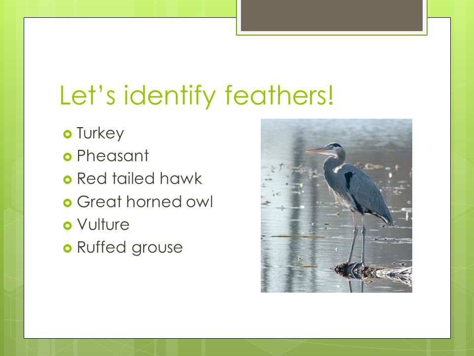 Let's identify feathers!
