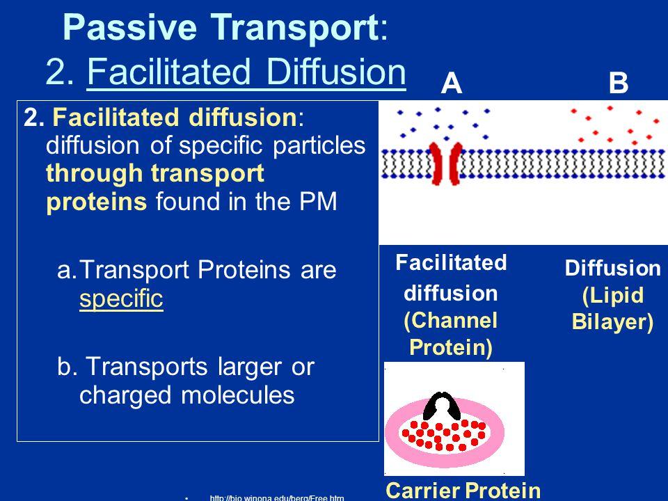 Facilitated diffusion (Channel Protein) Diffusion (Lipid Bilayer)