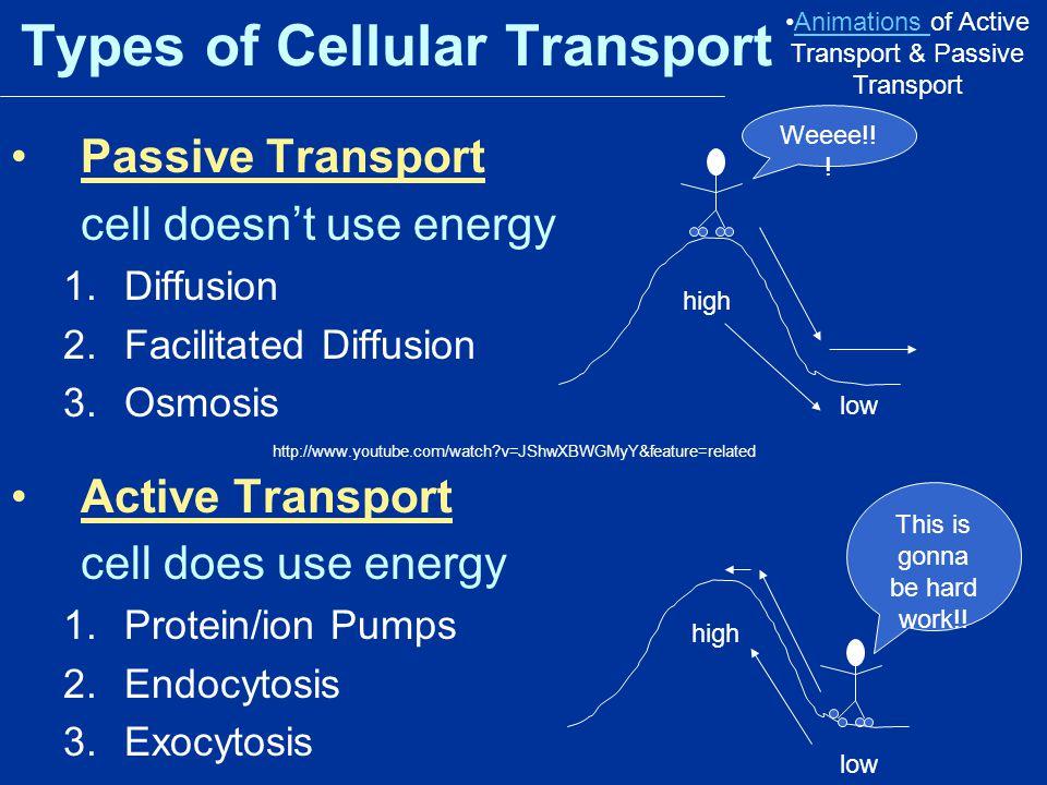 Types of Cellular Transport