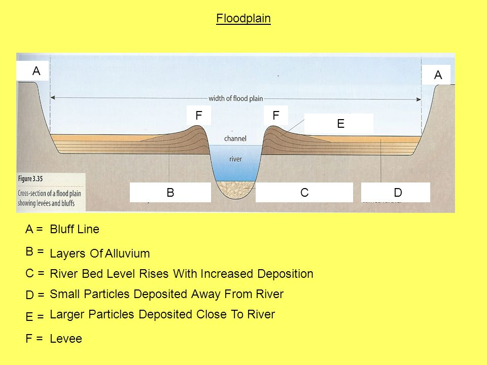 Floodplain A. F. E. B. C. D. A = B = C = D = E = F = Bluff Line. Layers Of Alluvium. River Bed Level Rises With Increased Deposition.