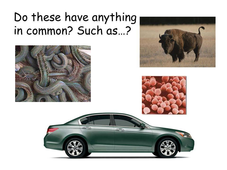 Do these have anything in common Such as…