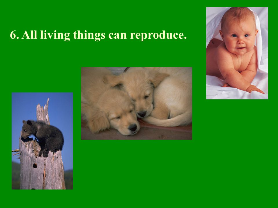 6. All living things can reproduce.