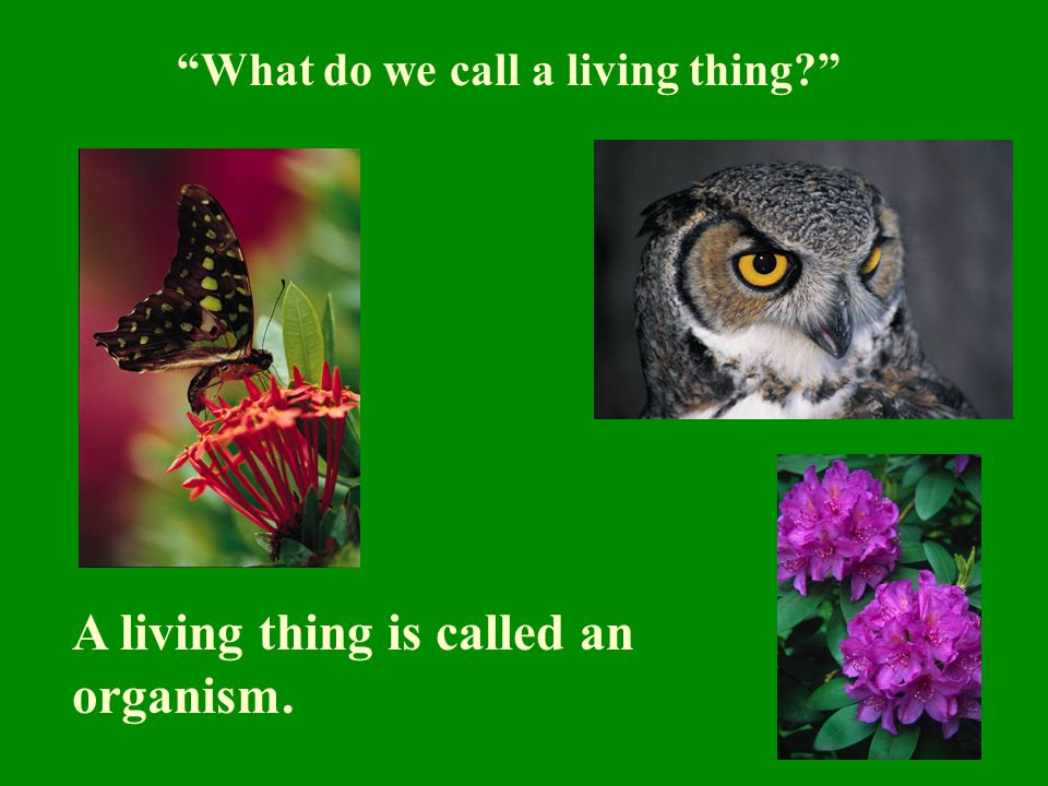 A living thing is called an organism.
