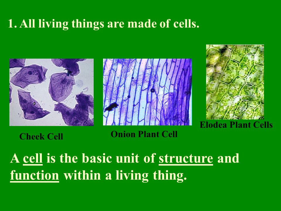1. All living things are made of cells.