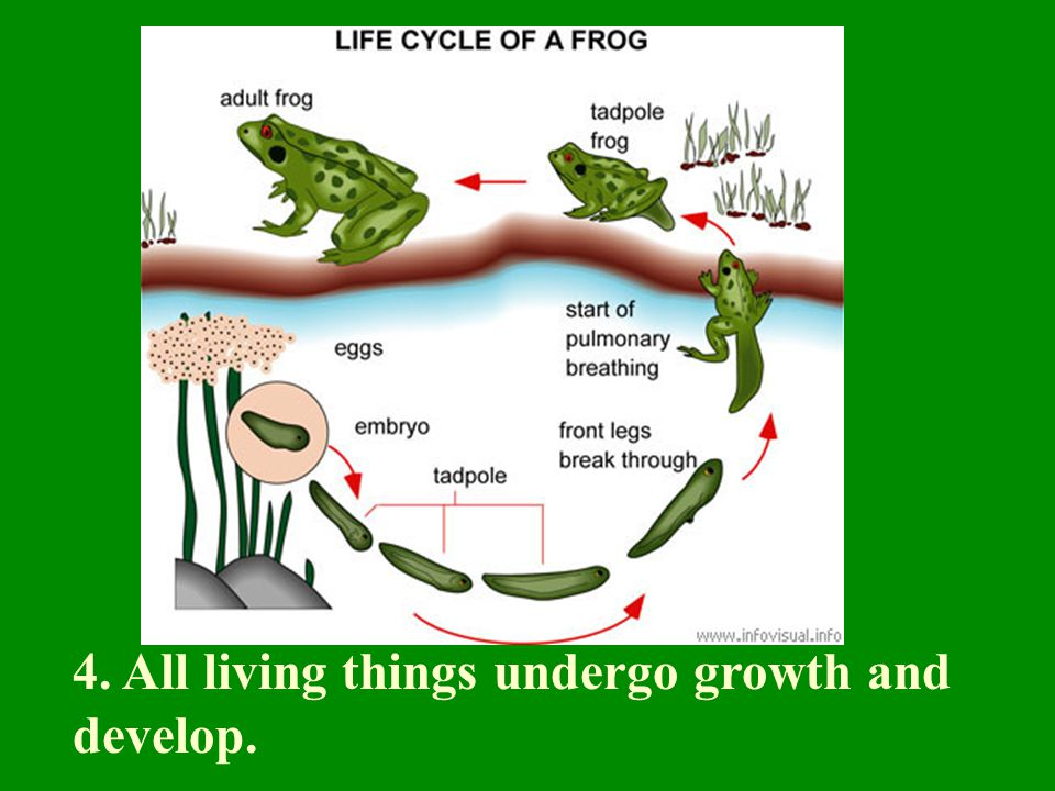 4. All living things undergo growth and develop.