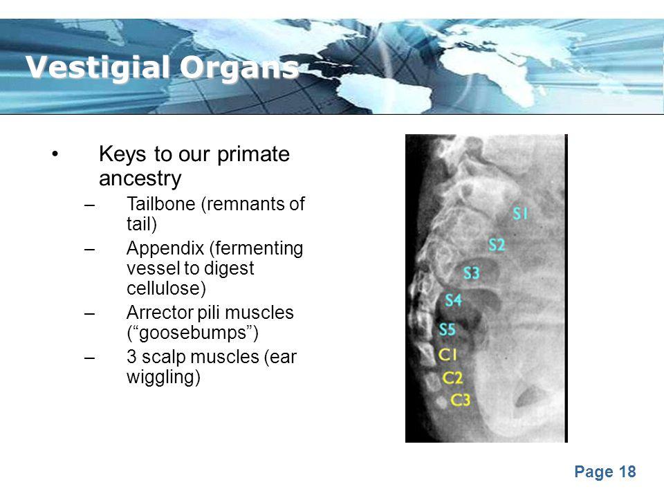 Vestigial Organs Keys to our primate ancestry