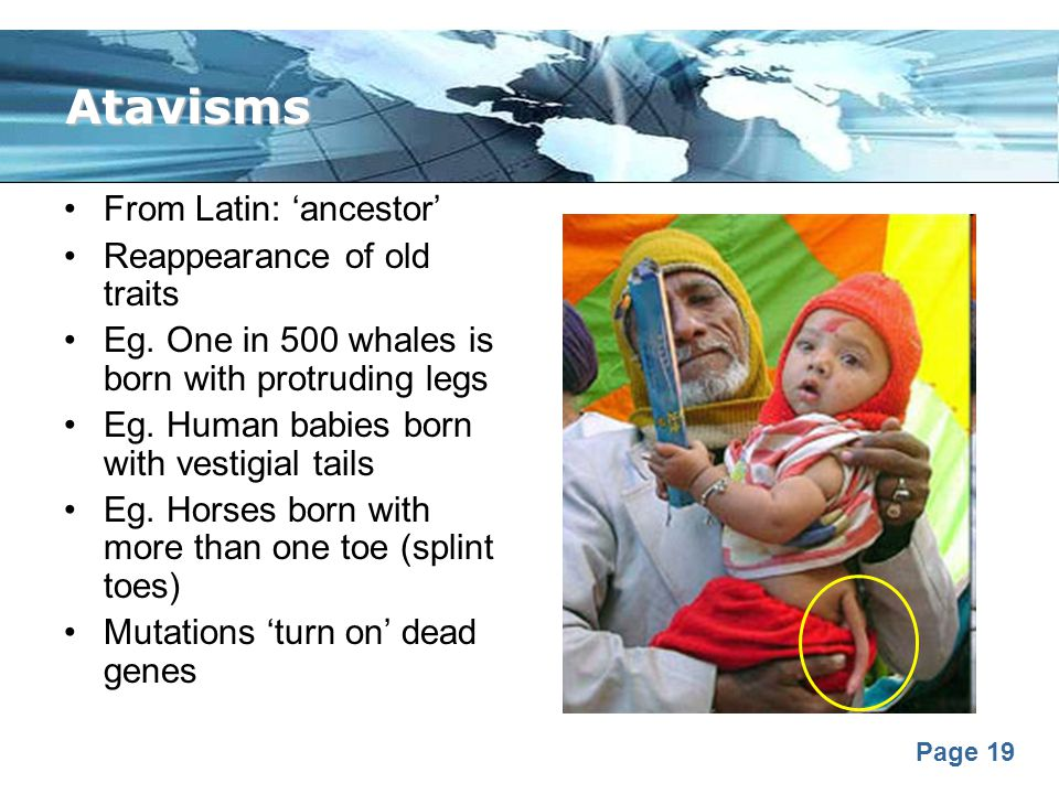 Atavisms From Latin: 'ancestor' Reappearance of old traits
