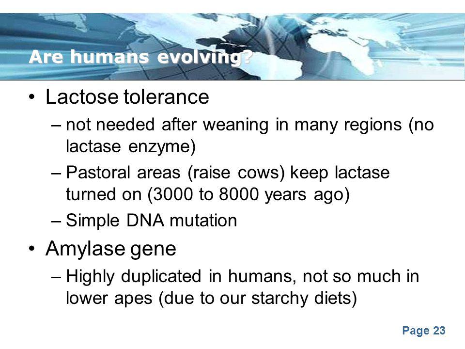 Lactose tolerance Amylase gene Are humans evolving