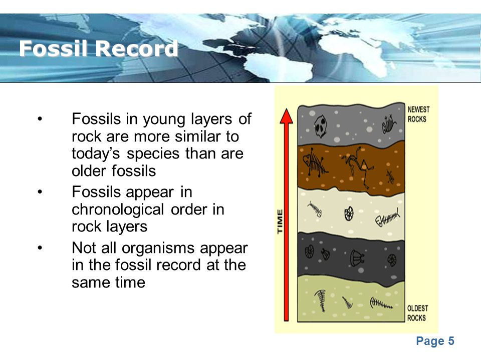 Fossil Record Fossils in young layers of rock are more similar to today's species than are older fossils.