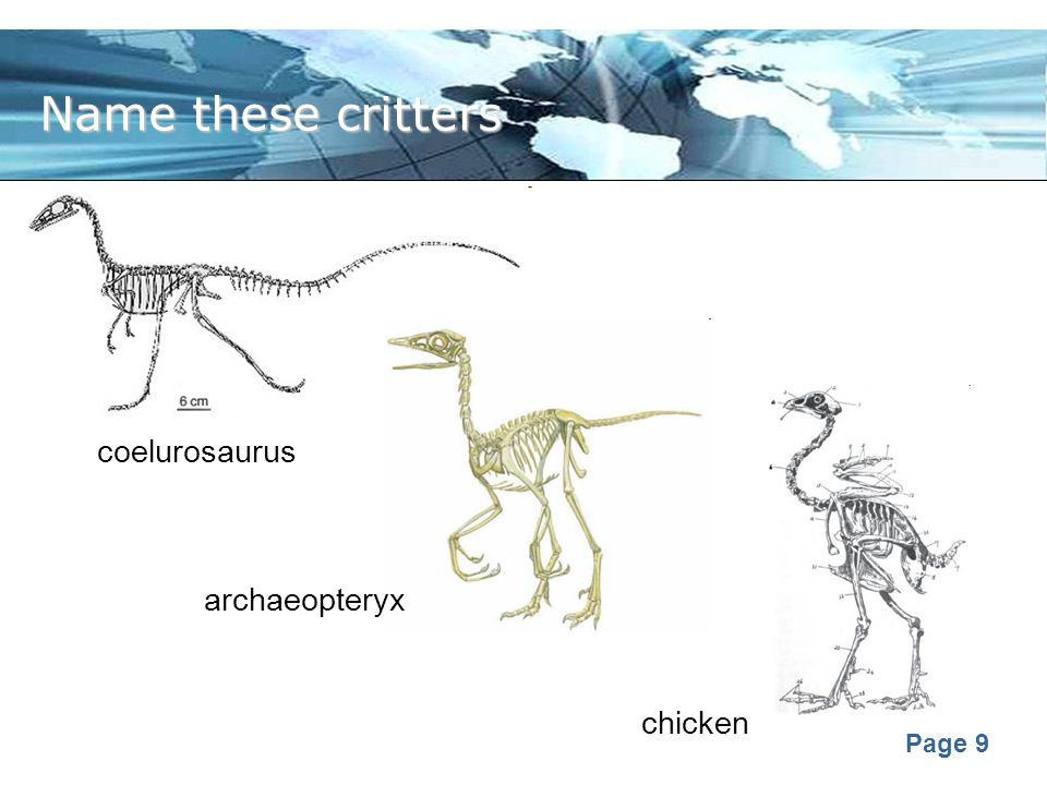 Name these critters coelurosaurus archaeopteryx chicken