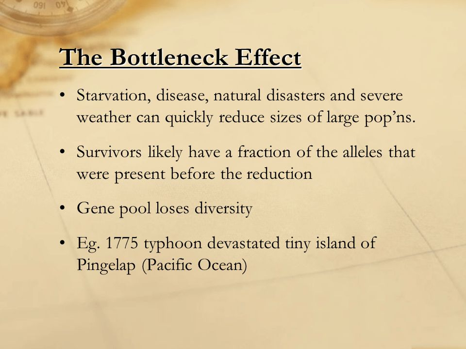 The Bottleneck Effect Starvation, disease, natural disasters and severe weather can quickly reduce sizes of large pop'ns.