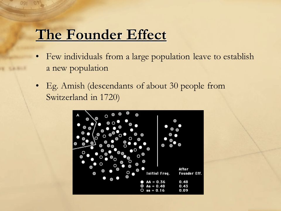 The Founder Effect Few individuals from a large population leave to establish a new population.