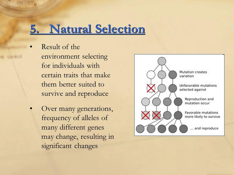 5. Natural Selection