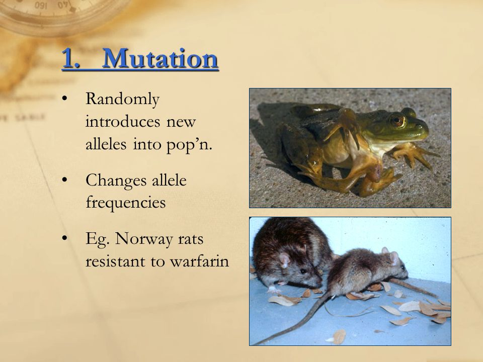 1. Mutation Randomly introduces new alleles into pop'n.