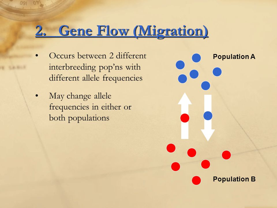 2. Gene Flow (Migration) Occurs between 2 different interbreeding pop'ns with different allele frequencies.