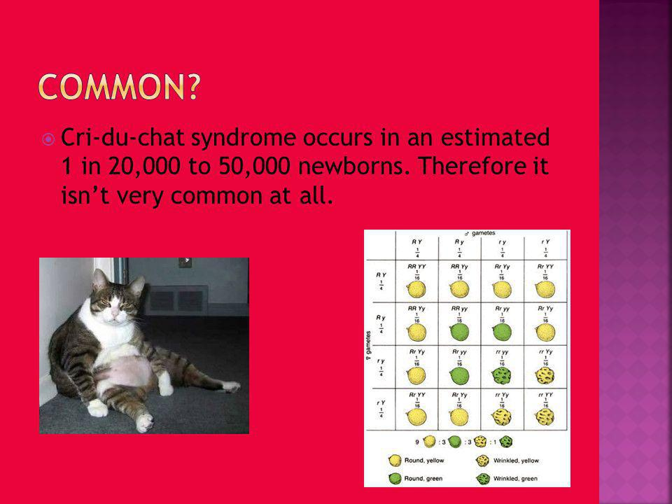 Common. Cri-du-chat syndrome occurs in an estimated 1 in 20,000 to 50,000 newborns.