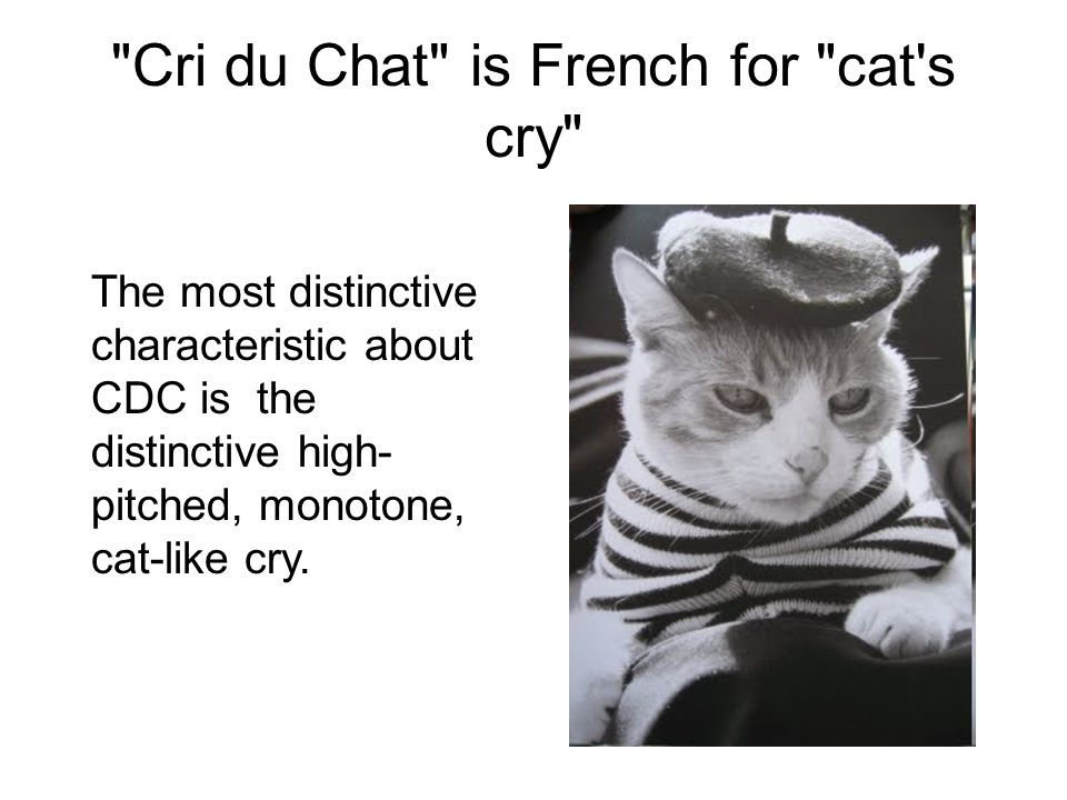 Cri du Chat is French for cat s cry