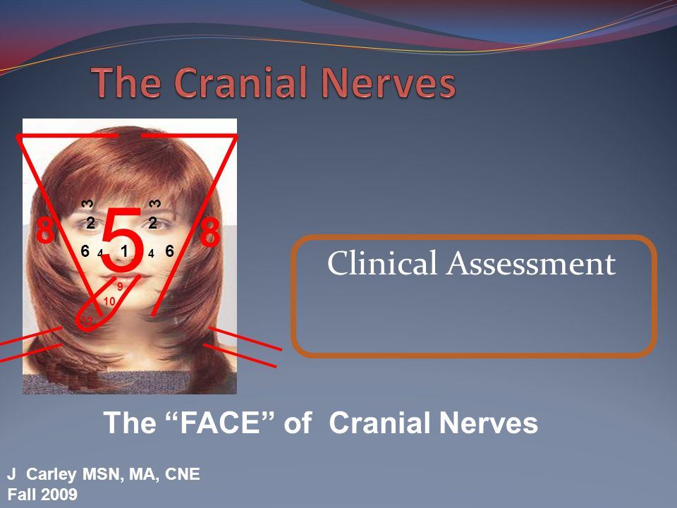 5 The Cranial Nerves 8 8 Clinical Assessment