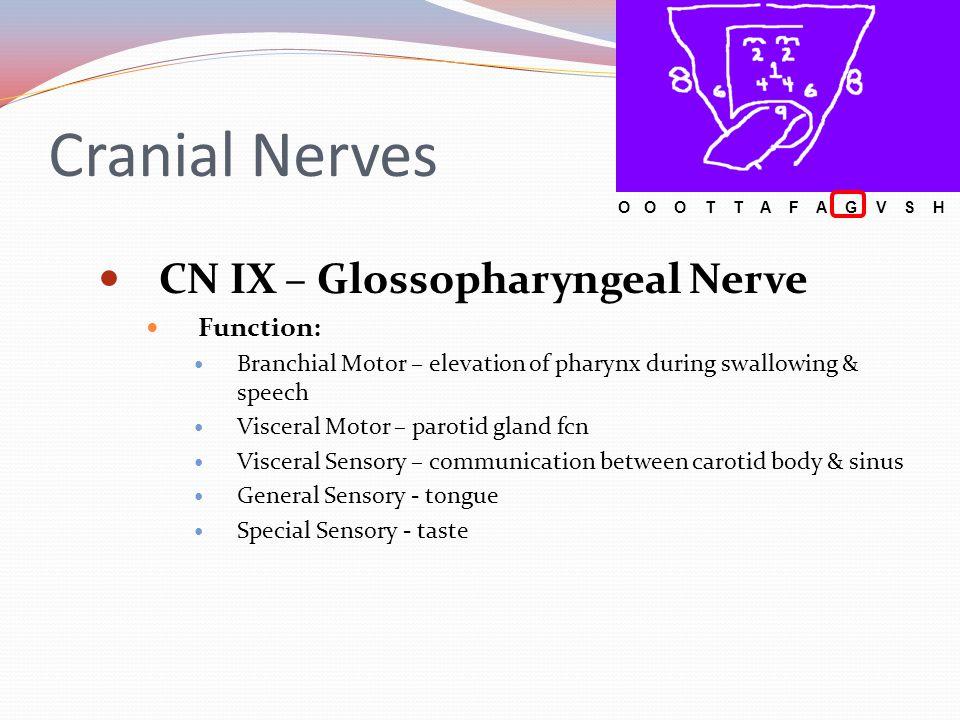 Cranial Nerves CN IX – Glossopharyngeal Nerve Function:
