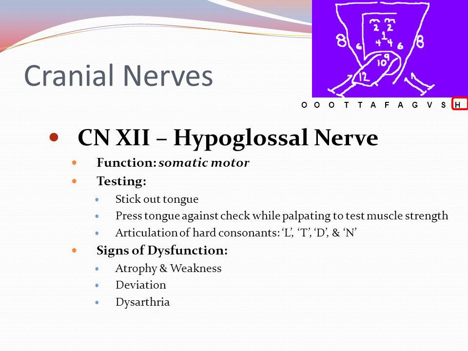 Cranial Nerves CN XII – Hypoglossal Nerve Function: somatic motor