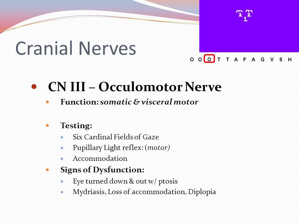 Cranial Nerves CN III – Occulomotor Nerve