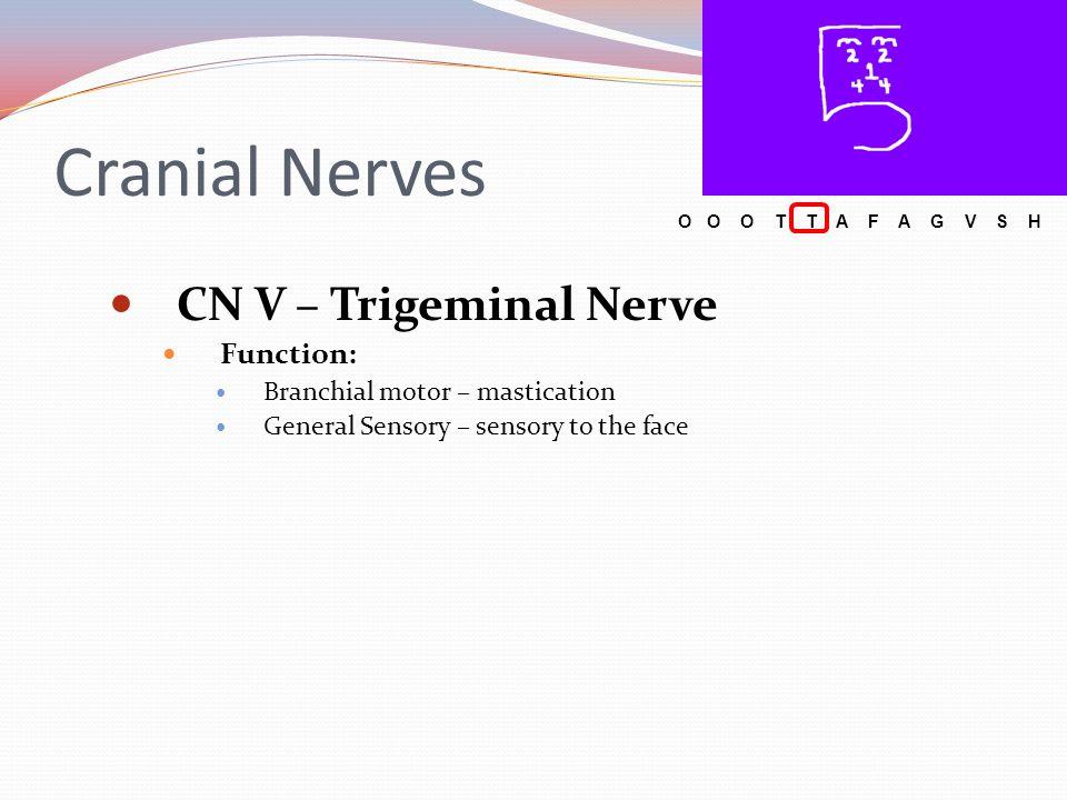 Cranial Nerves CN V – Trigeminal Nerve Function: