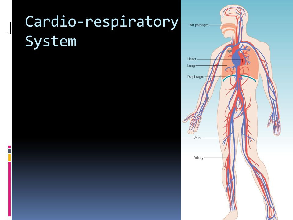 Cardio-respiratory System