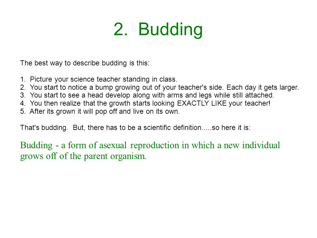 2. Budding The best way to describe budding is this: 1. Picture your science teacher standing in class.