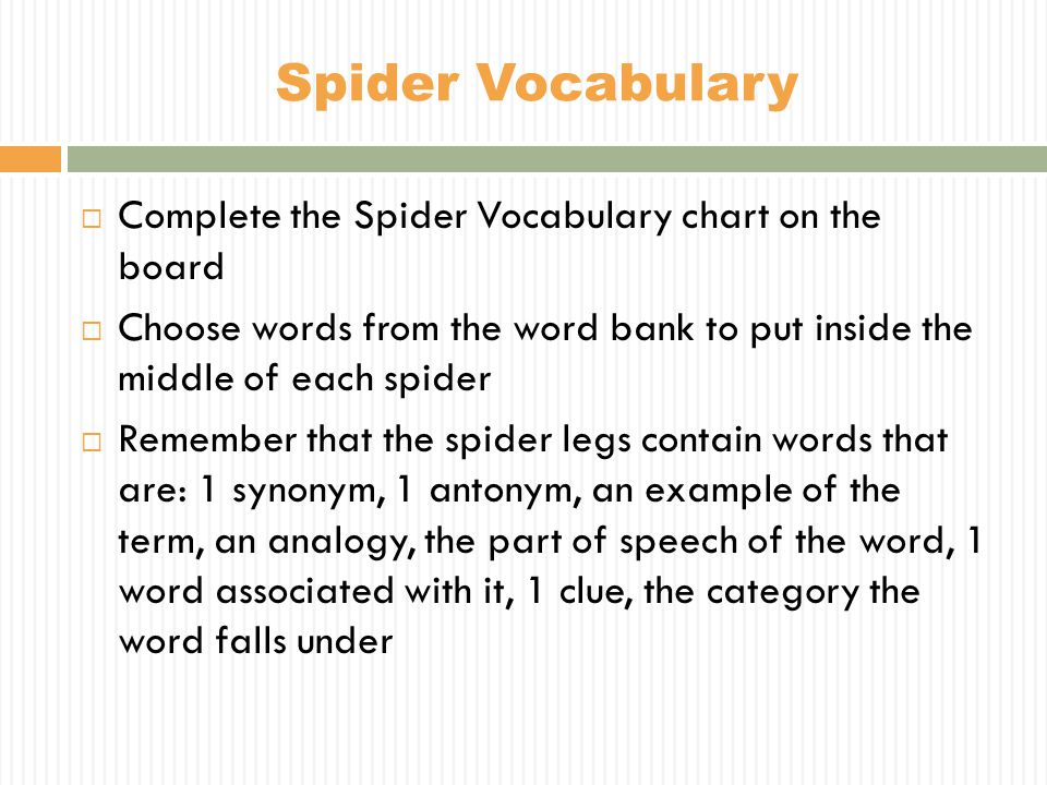 Spider Vocabulary Complete the Spider Vocabulary chart on the board
