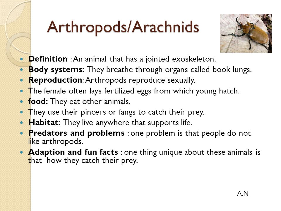 Arthropods/Arachnids