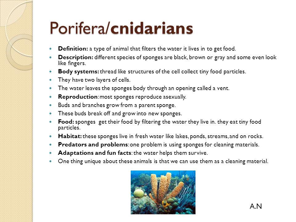 Porifera/cnidarians A.N