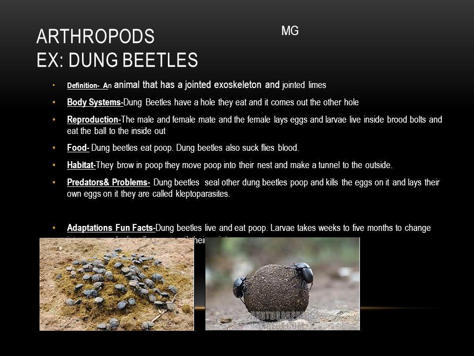 Arthropods ex: Dung Beetles