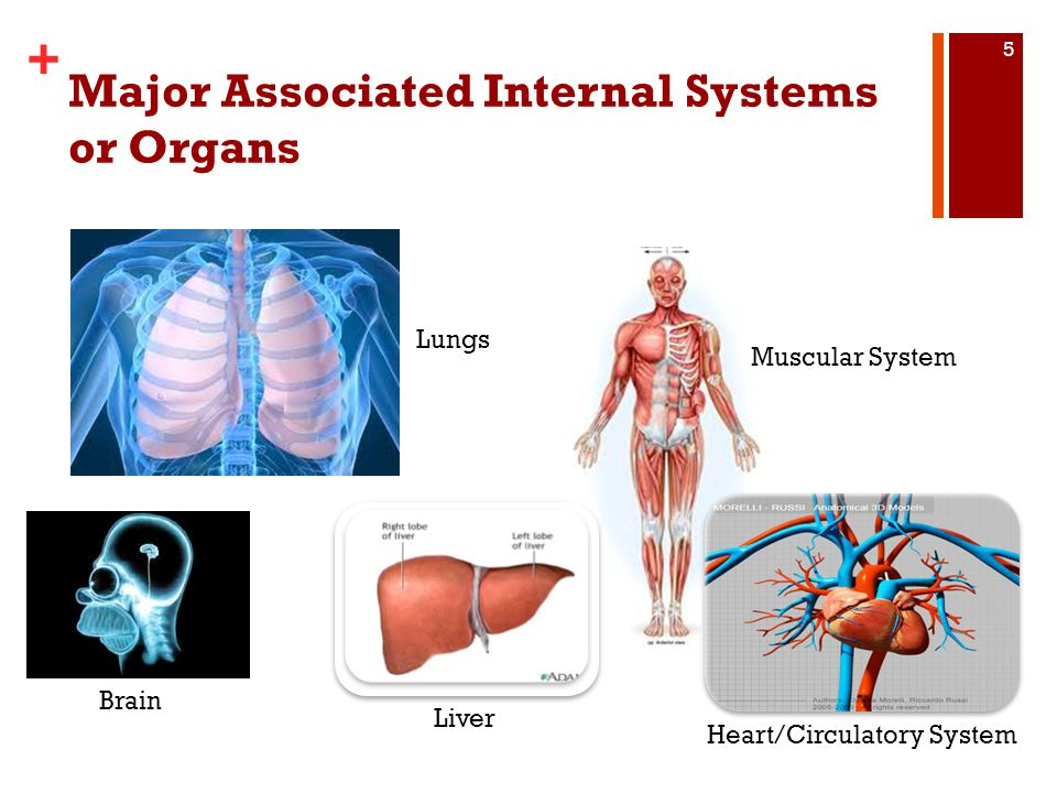 Major Associated Internal Systems or Organs