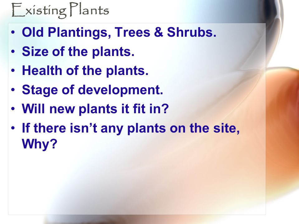 Existing Plants Old Plantings, Trees & Shrubs. Size of the plants.