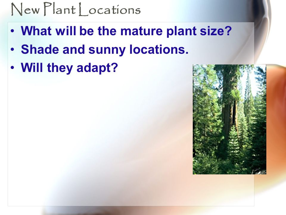 New Plant Locations What will be the mature plant size