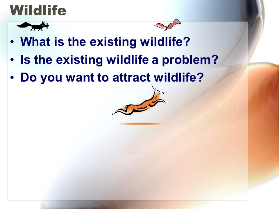 Wildlife What is the existing wildlife