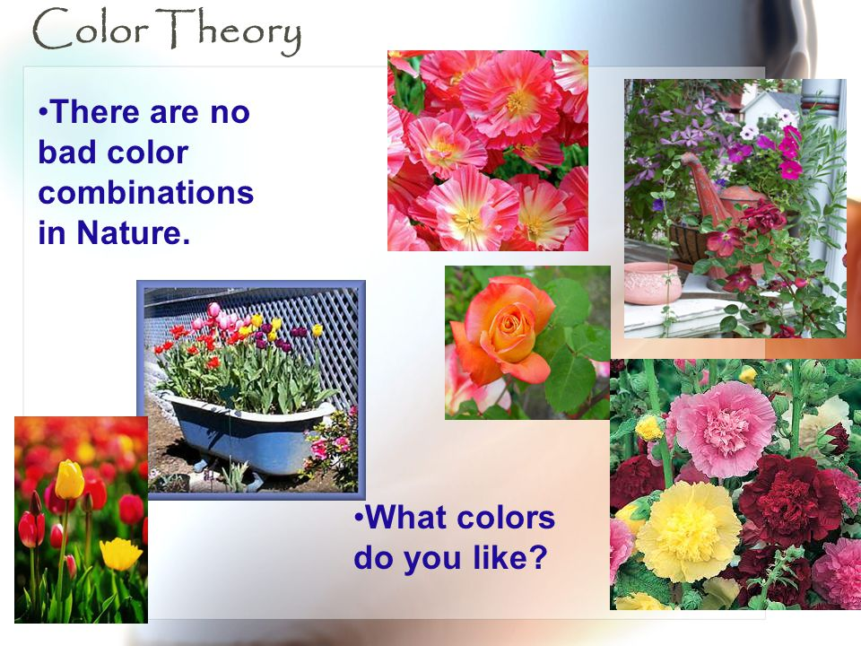 Color Theory There are no bad color combinations in Nature.