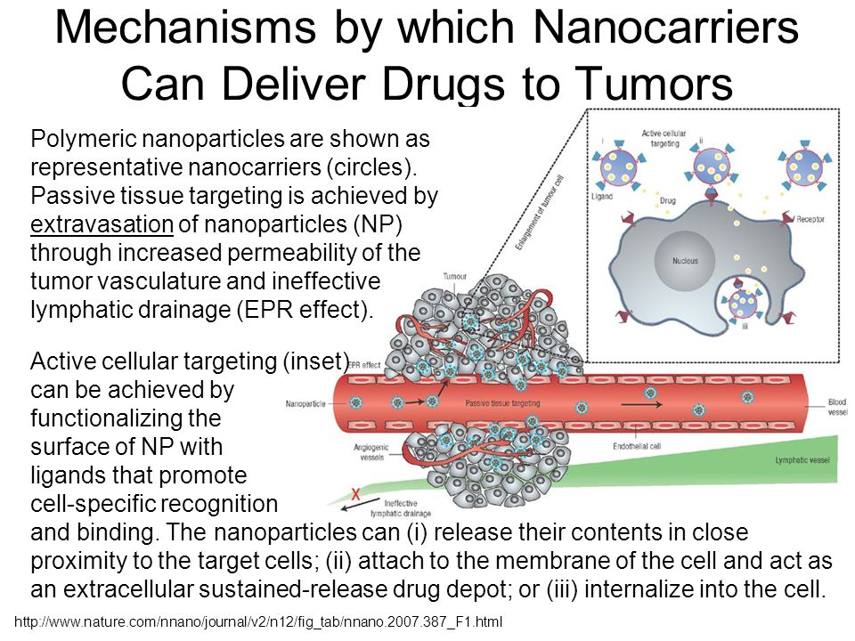 Mechanisms by which Nanocarriers Can Deliver Drugs to Tumors