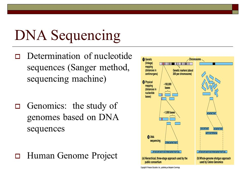 DNA Sequencing Determination of nucleotide sequences (Sanger method, sequencing machine) Genomics: the study of genomes based on DNA sequences.