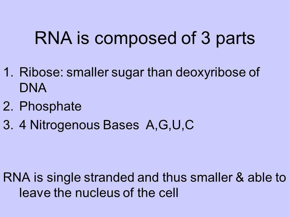 RNA is composed of 3 parts