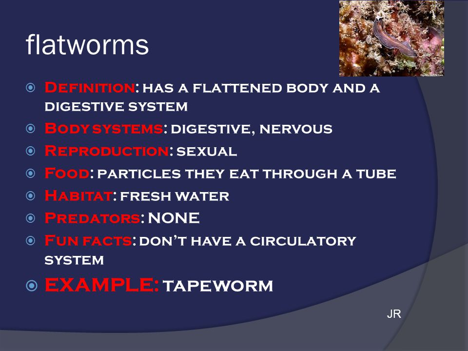 flatworms EXAMPLE: tapeworm