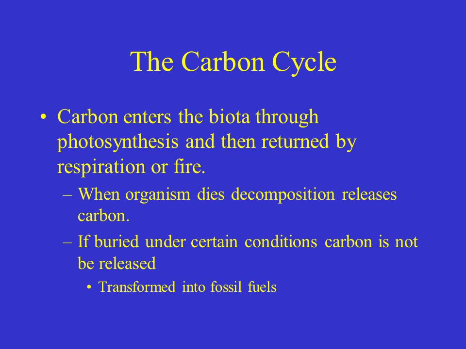 The Carbon Cycle Carbon enters the biota through photosynthesis and then returned by respiration or fire.