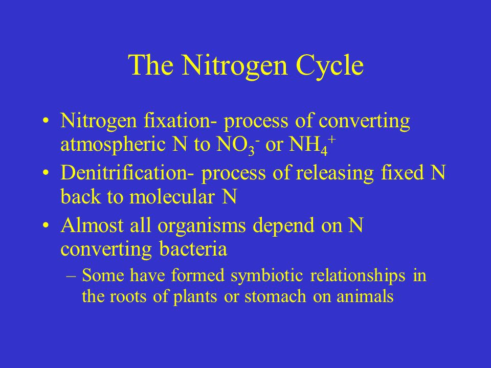 The Nitrogen Cycle Nitrogen fixation- process of converting atmospheric N to NO3- or NH4+