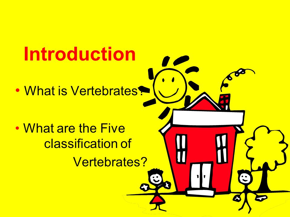 What is Vertebrates What are the Five classification of Vertebrates