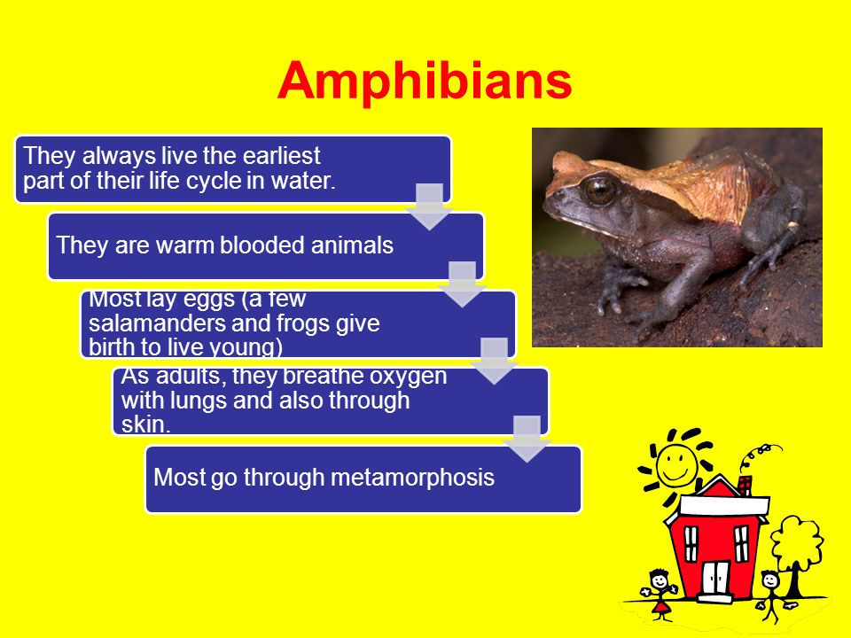 Amphibians They always live the earliest part of their life cycle in water. They are warm blooded animals.